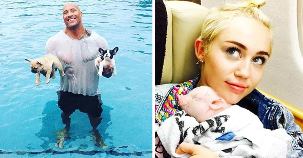 15+ Cutest Photos Of Celebrities With Their Pets